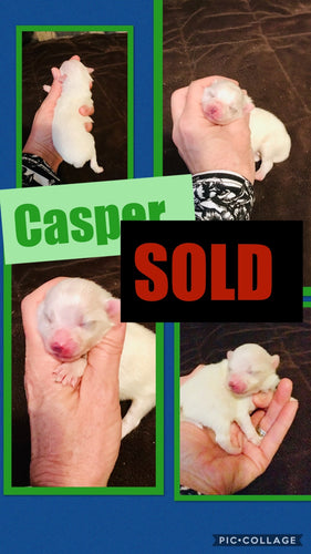 SOLD- Click On Picture For More Info- Deposit for Casper