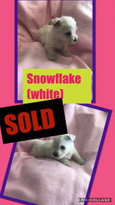 SOLD- Click On Picture For More Info- Deposit for Snowflake