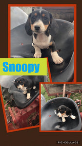 SOLD- Click On Picture For More Info- Deposit for Snoopy