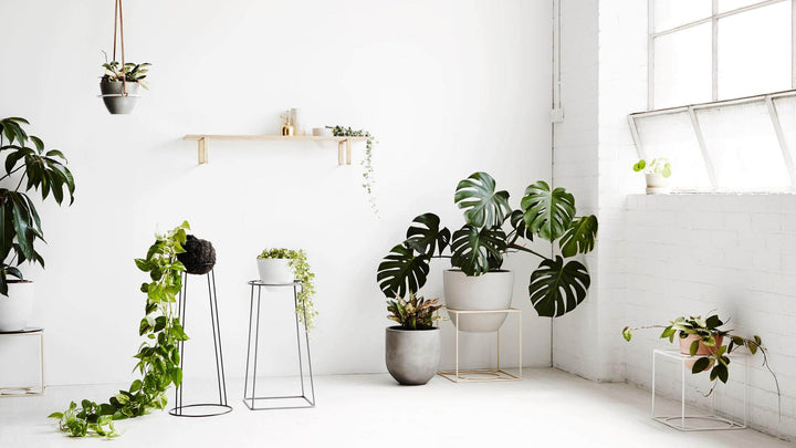 5 Houseplants that can make you healthier | Zero Waste Living | Boomi