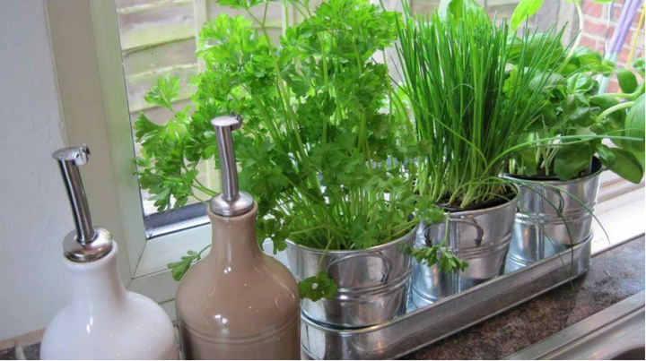 10 Vegetables And Herbs You Can Easily Grow In Your Apartment