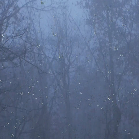Rain & Thunder Sounds in the Foggy Forest MP3