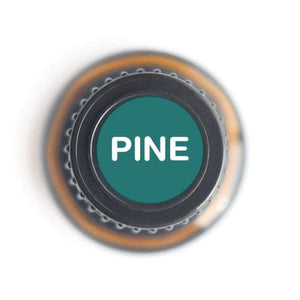 Pine Pure Essential Oil - 15ml
