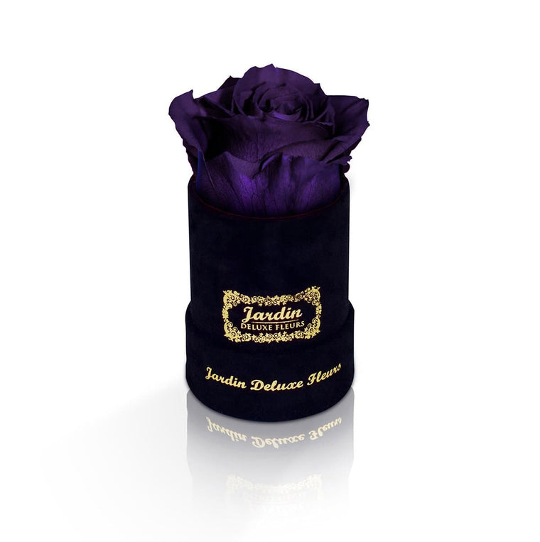 1 Dark Purple Long Lasting Rose in Black Suede Hatbox