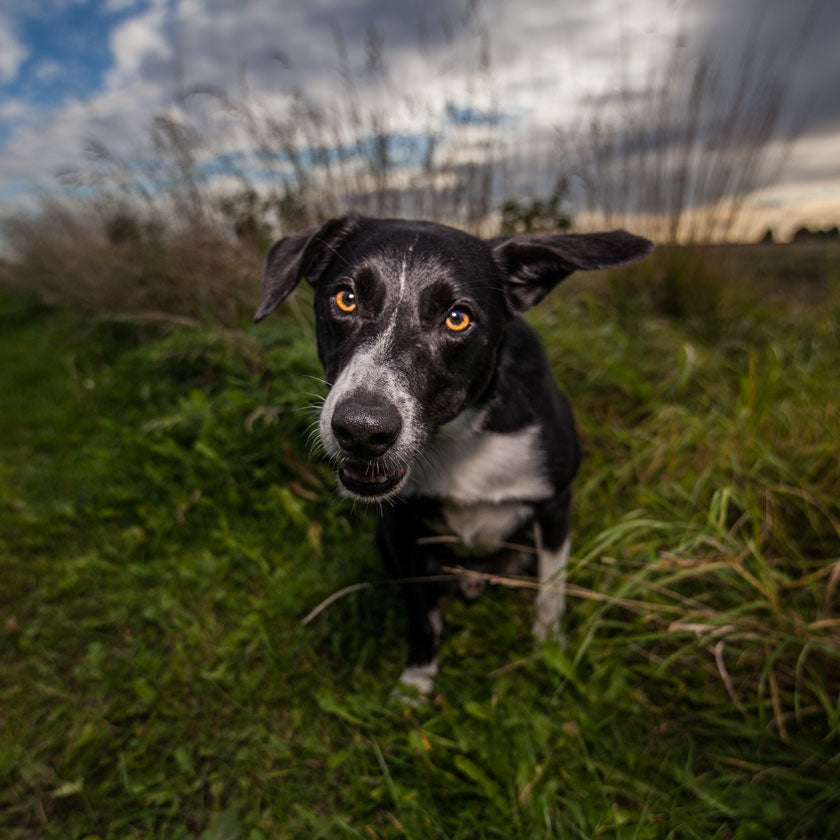 hertfordshire dog photographer