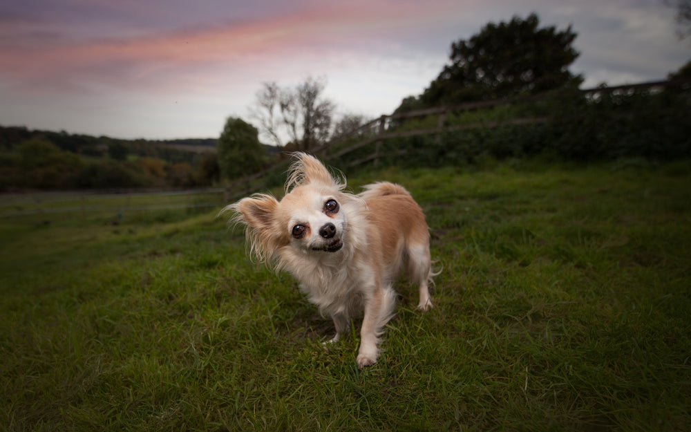 top 10 dog photographer essex