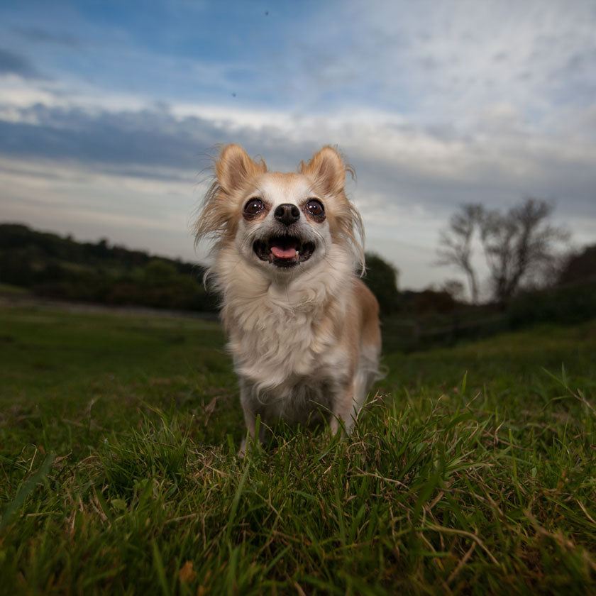 loughton dog photographer