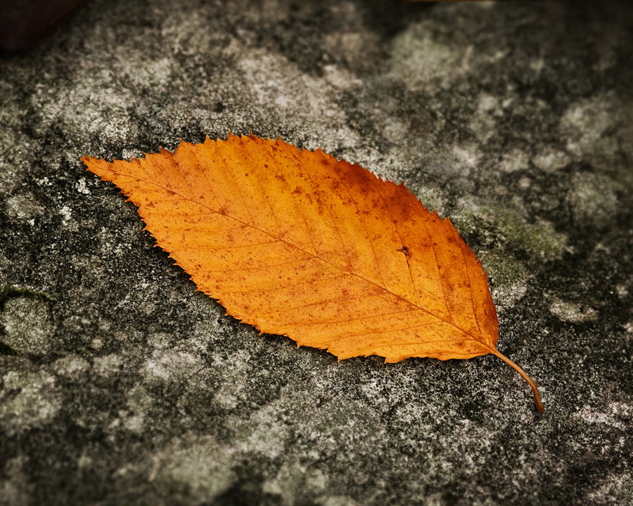 Fallen Leaf Autumn - Deeds.pk
