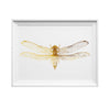 Hand Printed Gold Foil Dragonfly Screen Print - Insect / Butterfly Design A3 - HOWKAPOW
