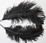 "Ostrich Feather, One Piece 20-22"" Black Ostrich Drab Plume Feather"