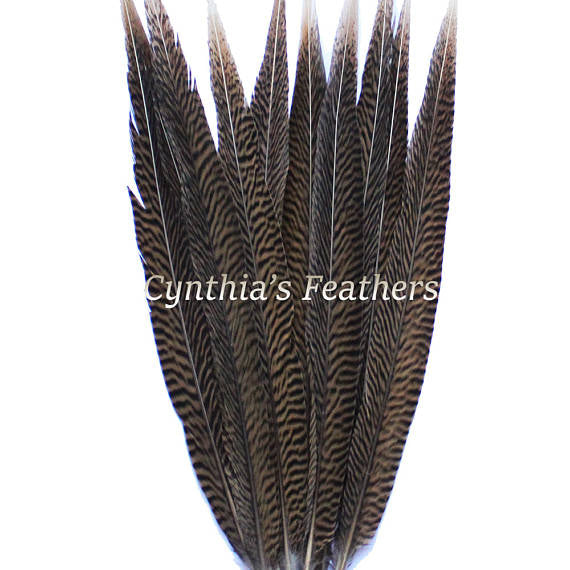 "Pheasant Feathers Natural Golden Pheasant Tail Feathers 10 Pieces 14-16"" Long SKU: 7A92"