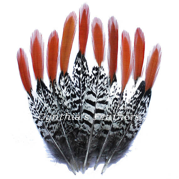 Pheasant Feathers Natural Lady Amherst Pheasant Red Orange Tip Feathers 10 Pieces 6-8 inches Long SKU: 7A71