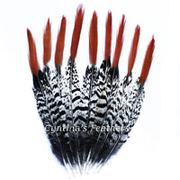 Pheasant Feathers Natural Lady Amherst Pheasant Red Orange Tip Feathers 10 Pieces 8-10 inches Long SKU: 7H73