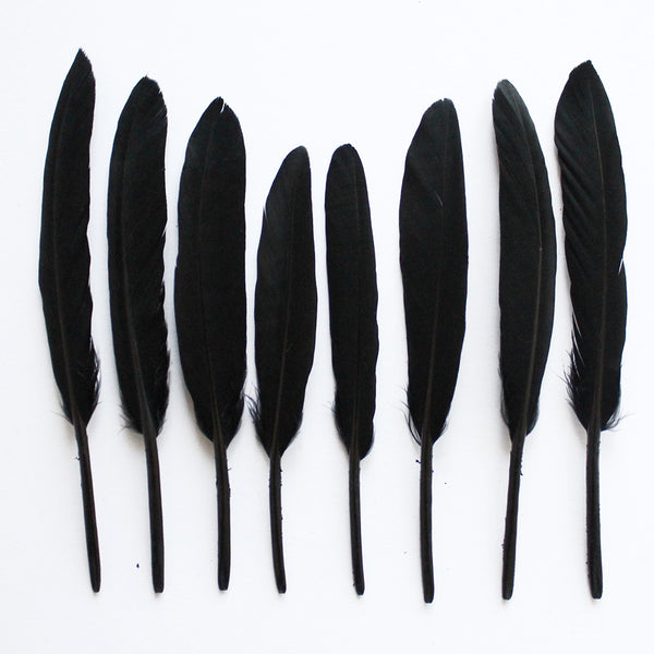 Duck Feathers, Black Duck Cochettes Feathers SKU: 7J13