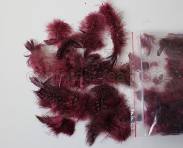 "12g (0.42oz) Burgundy 1~4"" Guinea Hen Plumage Feathers"