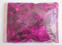 "12g (0.42oz) Fuschia 1~4"" Guinea Hen Plumage Feathers"