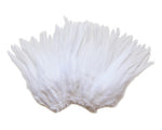 "5-7"" White Rooster Saddle Feathers for Crafting, Headpiece,  ~9g, 0.32Oz"