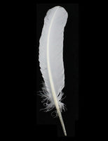 Turkey Feathers, White Turkey Round Quill Feathers 12-14 inches 20 Pieces SKU: 6A12
