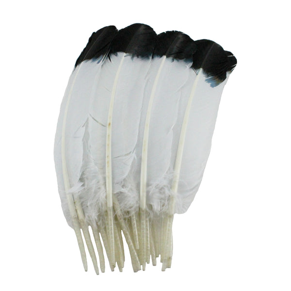 Turkey Feathers, White with Black tips Turkey Round Quill Feathers 12-14 inches 20 Pieces