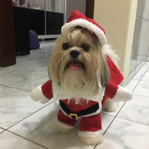 Christmas Pet Costume 2017 - Cutest and Funniest SANTA CLAUS Clothes for Your Cat and Small Dog (05 size) FREE SHIPPING