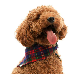 The Foggy Dog Noel Plaid Flannel Doggie Bandana