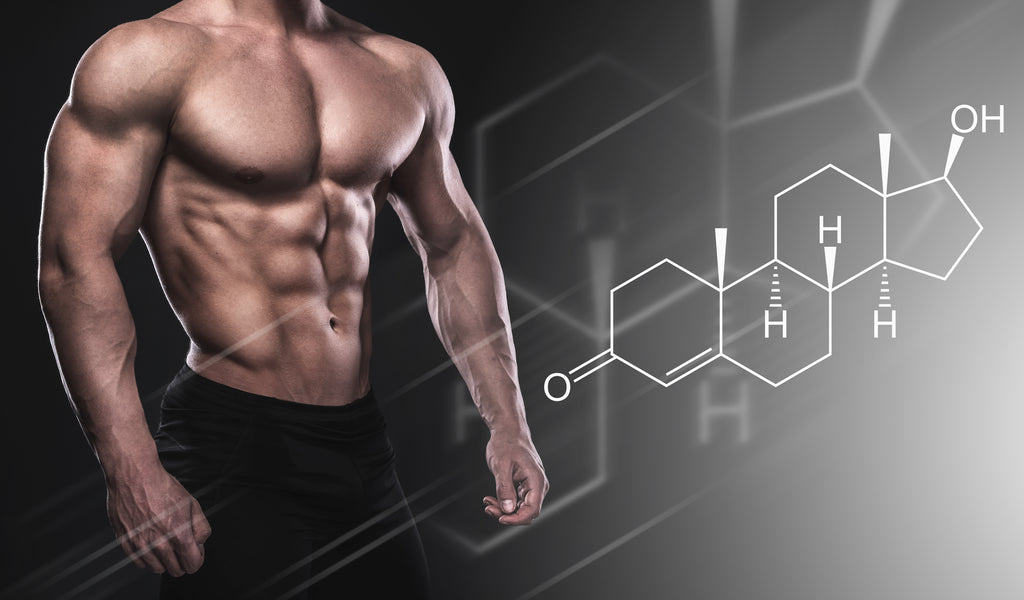 How To Gain Muscle With A Testosterone Booster