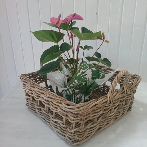 grove square storage baskets