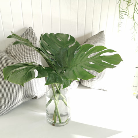 monstera foliage per stem