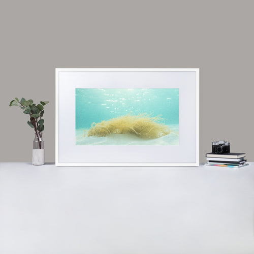 Dreams from the Sea - Matte Paper Framed Poster With Mat