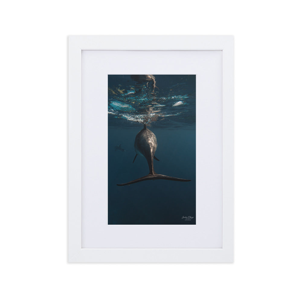 Dolphin tail - Matte Paper Framed Poster With Mat by Justin Okoye