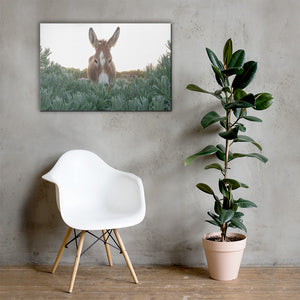 I see you Donkey - Canvas