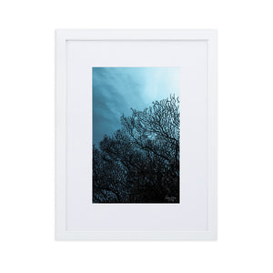 Sea fan - Matte Paper Framed Poster With Mat