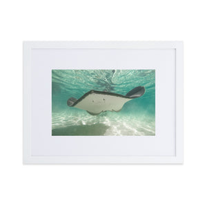 Dancing Ray - Matte Paper Framed Poster With Mat