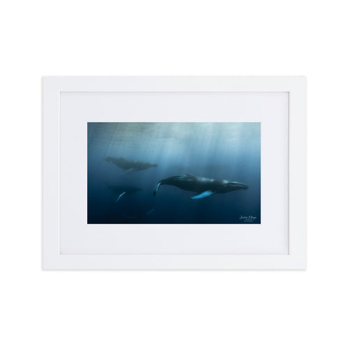 Whale fun - Matte Paper Framed Poster With Mat