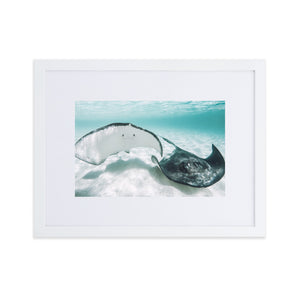Gibbs Ray - Matte Paper Framed Poster With Mat