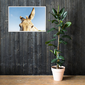 I See you Donkey 2 - Framed poster