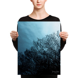 Sea Fan Underwater Canvas print