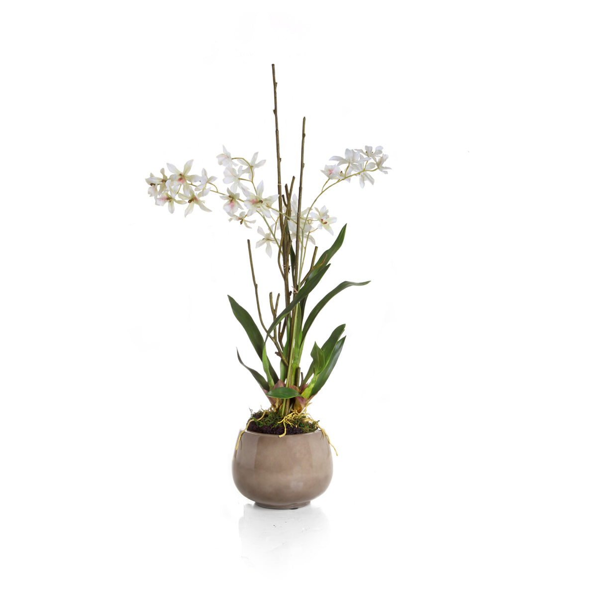 Dendrodium in Pot - Off White