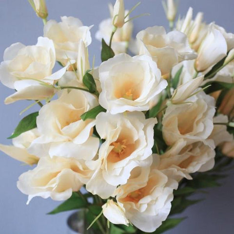 Lisianthus X7 - Light Yellow - Vinoti Living