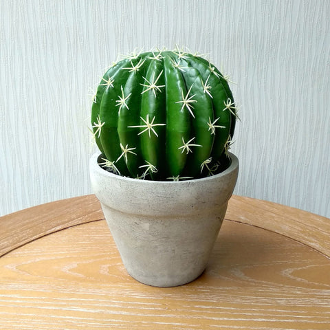 Cactus Round in Pot