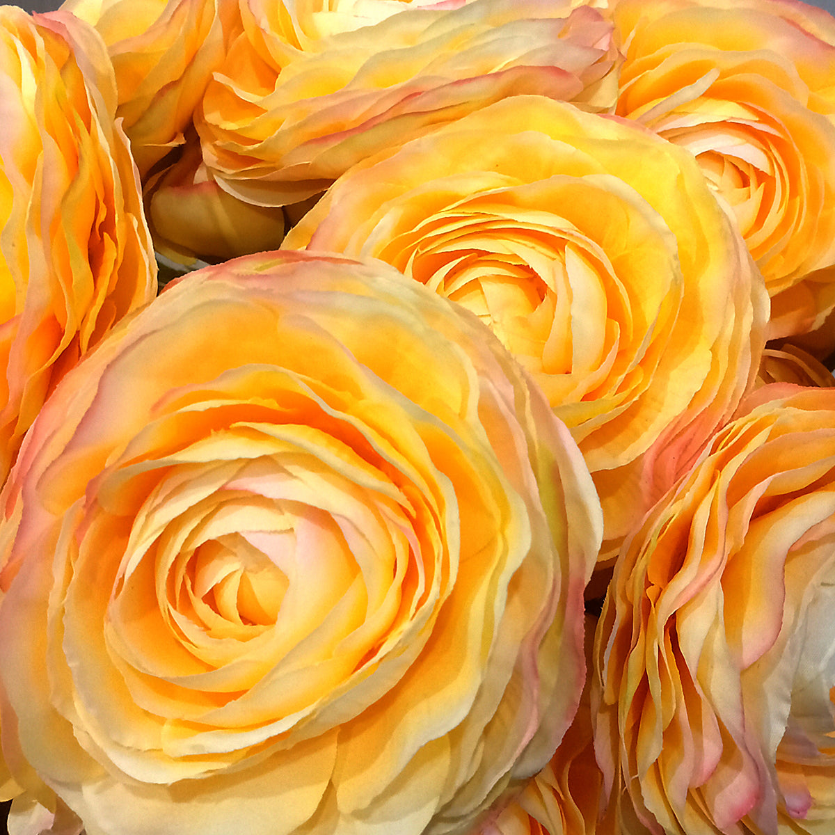 Ranunculus X2 -  Yellow