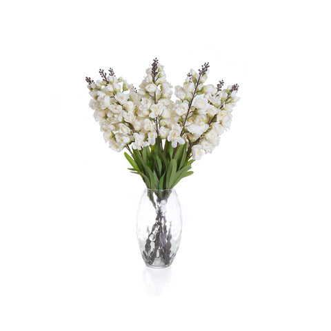 Single Antelope Orchid - Cream Bunch (Set of 12)