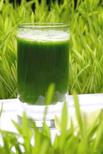 The Healing Power Of Wheatgrass Juice