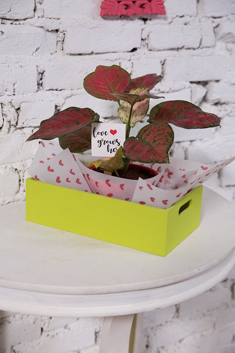 Love Grows Here Plant Box