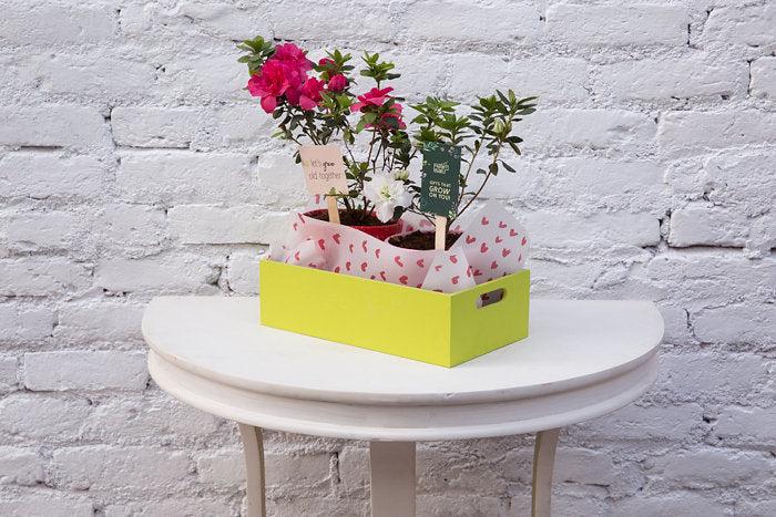 Lets Grow Old Together Double Plant Box