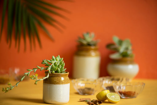 Pickle Jar Planter