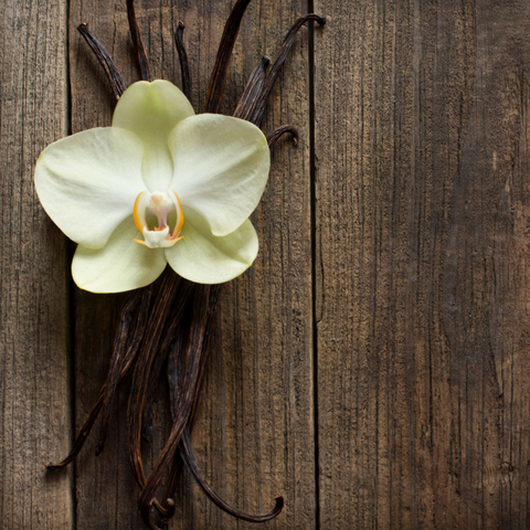 Vanilla - The Sexiest Scents, as Proven By Science