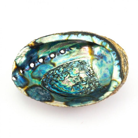 Medium Abalone Shell for Smudging