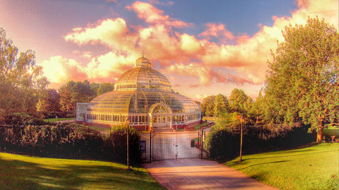 Palm House Liverpool canvas print