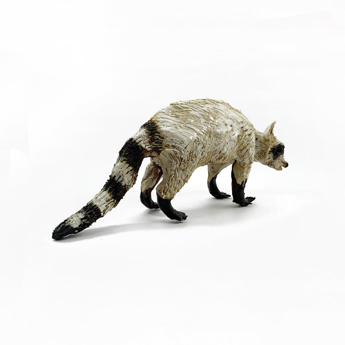 White Raccoon